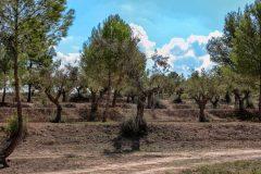Omgeving La Masia